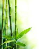 Bamboestelen en lichtstraal Stock Fotografie