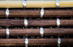 Bamboestokken Stock Afbeelding