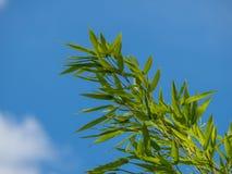 Bamboetakken tegen een blauwe hemel Royalty-vrije Stock Foto's