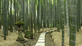 Bamboetuin in Kamakura stock footage