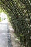 Bamboetunnel stock fotografie