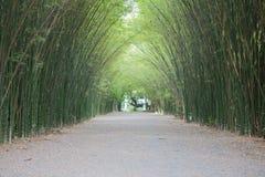 Bamboetunnel Stock Afbeelding