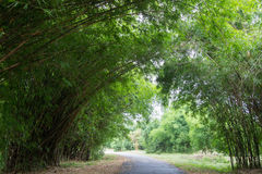 Bamboetunnel bij Waeruwan-Tuin, Phutthamonthon, de Provincie van Nakhon Pathom, Thailand Stock Afbeeldingen