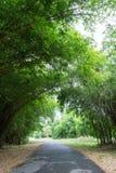 Bamboetunnel bij Waeruwan-Tuin, Phutthamonthon, de Provincie van Nakhon Pathom, Thailand Royalty-vrije Stock Foto's