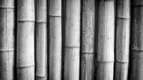 Bamboezwarte Stock Afbeelding