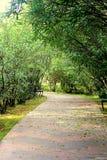 Bambok et arbres dans le jardin japonais Images libres de droits