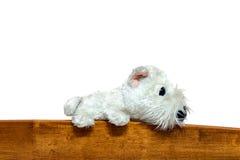 Bambola del cane sul letto del woodle Fotografie Stock