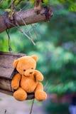 Bambola dell'orso fotografia stock libera da diritti