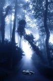 Bambola dimenticata sulla strada in foresta nebbiosa Immagine Stock