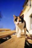 Bambola e cielo blu svegli del gatto del gattino del bambino Fotografie Stock Libere da Diritti