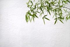 bamboo белизна передней стены Стоковые Фотографии RF
