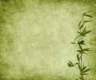 bamboo белизна изоляции ветви Стоковая Фотография RF