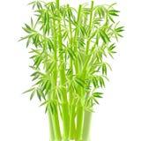 bamboo вектор Стоковые Изображения RF