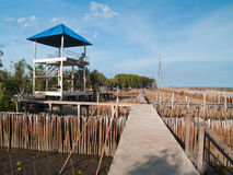 bamboo взгляд пробки башни пункта ffield Стоковые Фотографии RF