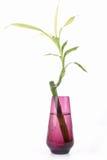 bamboo детеныши Стоковые Фото