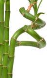 Bamboo завод Стоковые Изображения RF