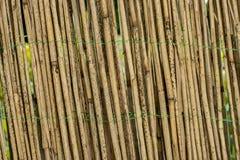 bamboo загородка Стоковое Фото