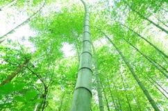 bamboo зеленый вал Стоковое Изображение