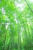 bamboo зеленый вал Стоковое Фото