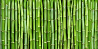 bamboo знамя Стоковое Изображение RF