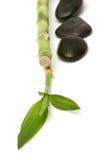 bamboo камни массажа Стоковое Фото