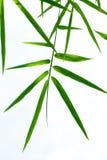 bamboo листья Стоковые Фотографии RF