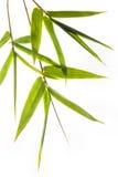 bamboo листья Стоковые Изображения RF