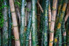 bamboo надпись на стенах Стоковые Изображения RF
