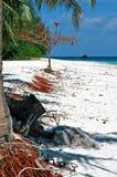 bamboo остров Стоковое Изображение