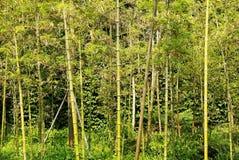 bamboo парк Стоковые Фото