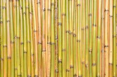 Bamboo предпосылка Стоковые Изображения