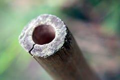 bamboo пробка Стоковые Изображения RF
