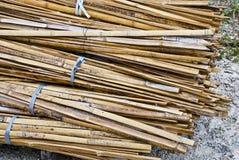 bamboo пук Стоковая Фотография