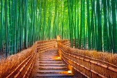 Bamboo пуща в Киото, японии стоковые изображения rf