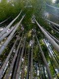 Bamboo пуща в Киото, японии стоковое фото rf