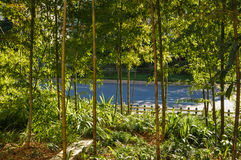 Bamboo пуща в солнечности Стоковые Изображения