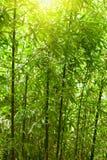 bamboo пуща естественная Стоковое Изображение