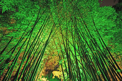Bamboo пуща на ноче Стоковая Фотография
