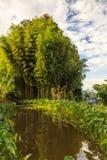 Bamboo пуща освещенная светом утра Стоковые Изображения RF