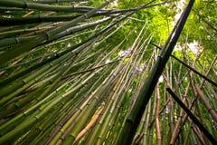 bamboo пуща Стоковая Фотография RF