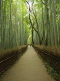 bamboo пуща Стоковое Изображение