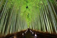 Bamboo пуща Стоковая Фотография