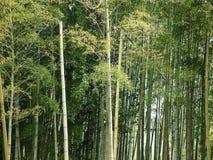 bamboo пуща стоковые изображения
