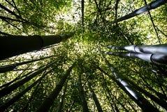bamboo пуща Стоковые Фотографии RF