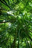 bamboo роща Стоковое Изображение RF