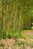 bamboo роща стоковое фото rf