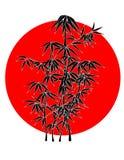 bamboo солнце Стоковая Фотография