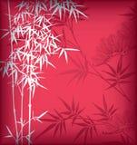 bamboo сосенка Стоковое Фото