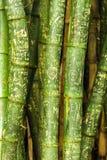 bamboo сочинительства надписи на стенах крупного плана Стоковые Изображения