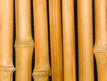 bamboo стволы дерева Стоковое Изображение RF